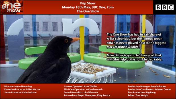 BBC One Show bird cams